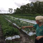 Jupiter Middle Schools Culinary Students Visit Local Farm – Part of Healthier Jupiter Mini Grant